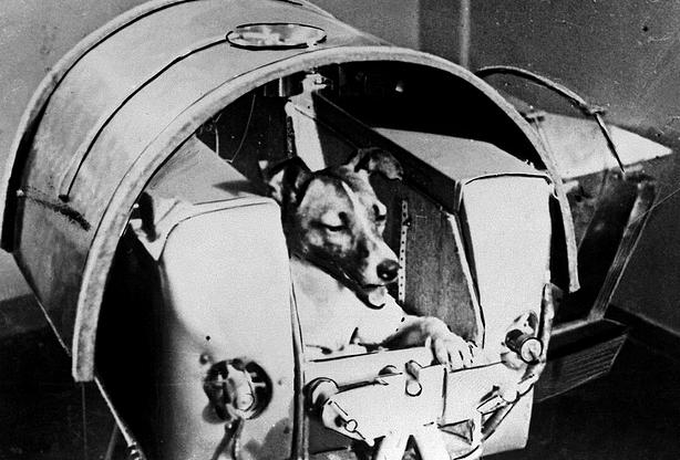 Neste dia, 3 de novembro: Lançamento do Sputnik 2