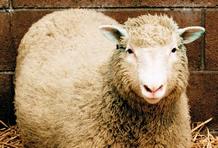ovelha dolly.